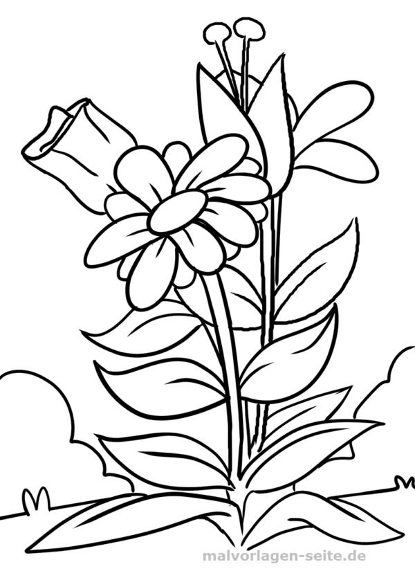 Malvorlage Blume | Pinterest | Outlines