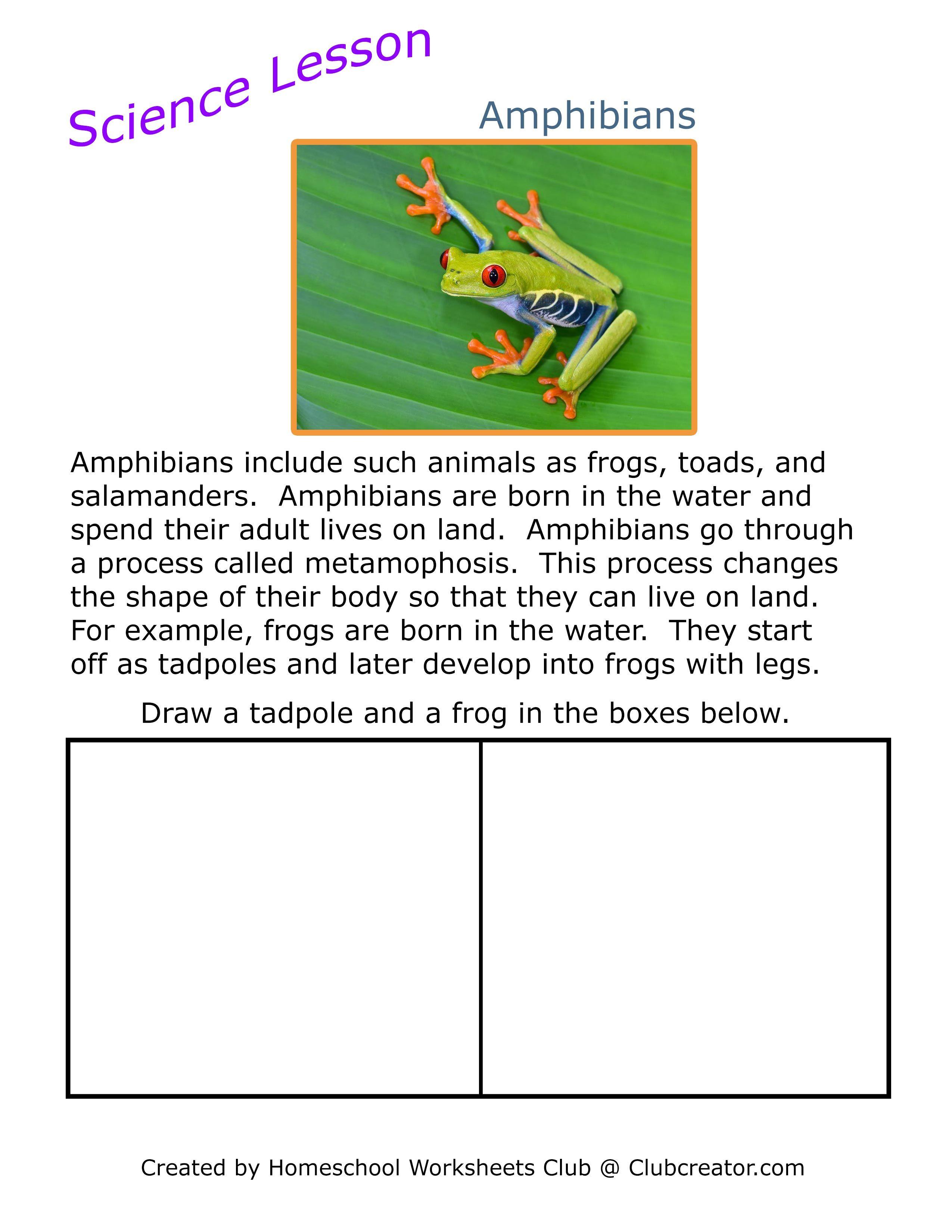 Science Amphibians Worksheet In