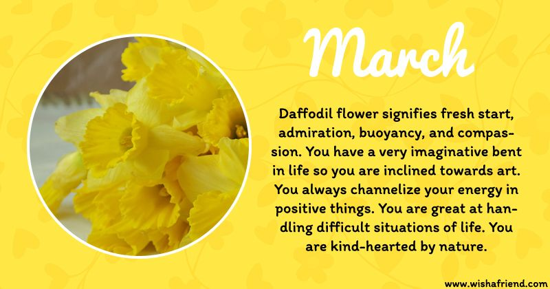 March Birth Flower Daffodil Birth Flowers Birth Month Flowers March Birth Flowers
