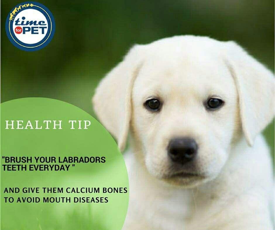 Labrador Care Tips Timeforpet Dogs Dog Labrador Healthtips Dogcare Doglove Petcare Petlove Pet Pets B Labrador Care Animal Rescue Stories Dog Care
