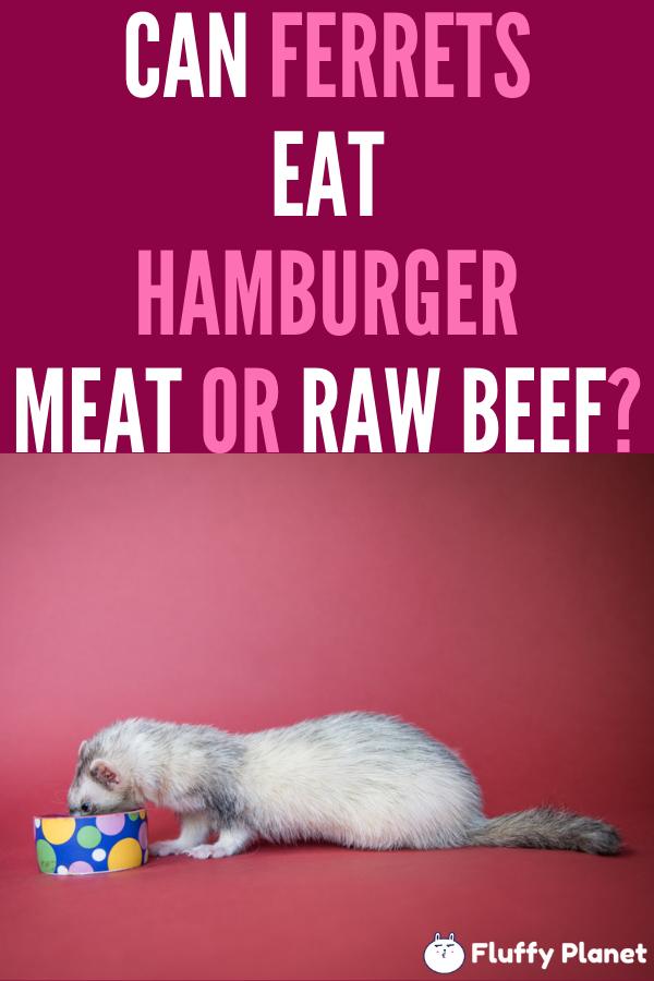 Can Ferrets Eat Hamburger Meat Or Raw Beef Fluffyplanet Com Ferret Ferret Diet Pet Ferret