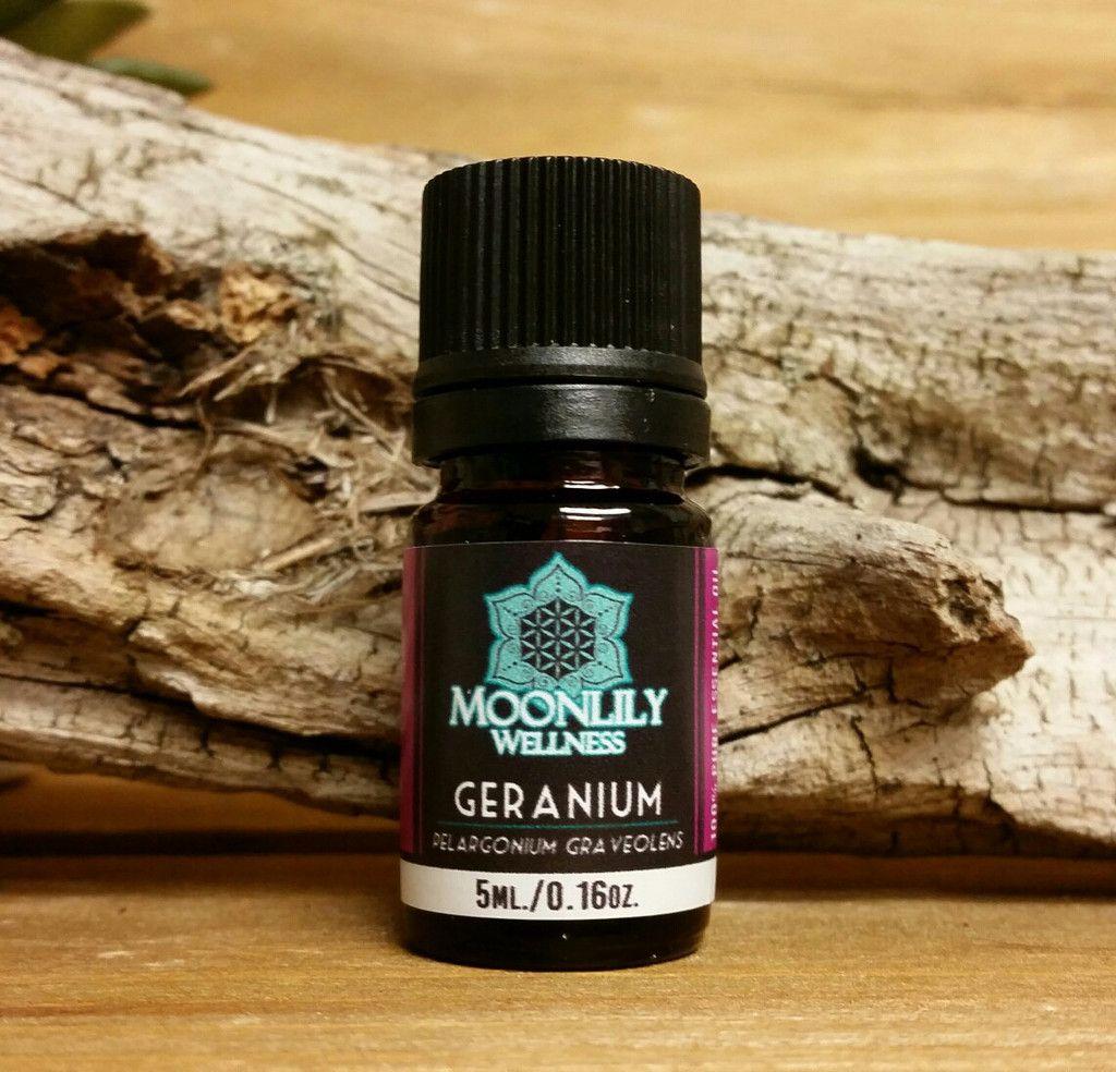 Geranium Geraniums, Helichrysum, Geranium plant