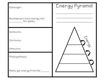 Food Chain And Energy Pyramid Brochure Foldable With Images