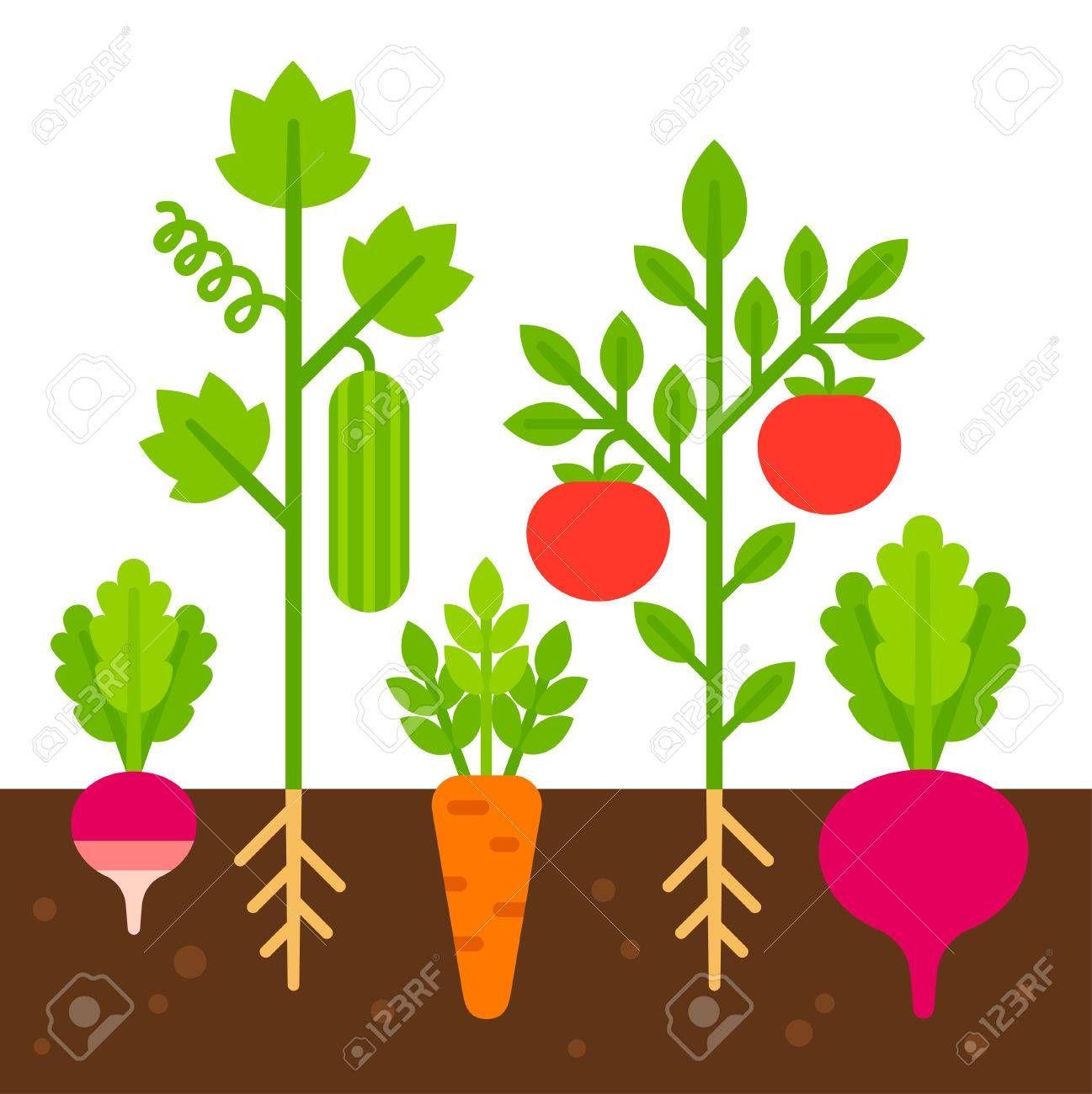 Vegetable Garden Simple Flat Cartoon Vector Illustration Cute Garden Illustration Vegetable Illustration Garden Layout Vegetable