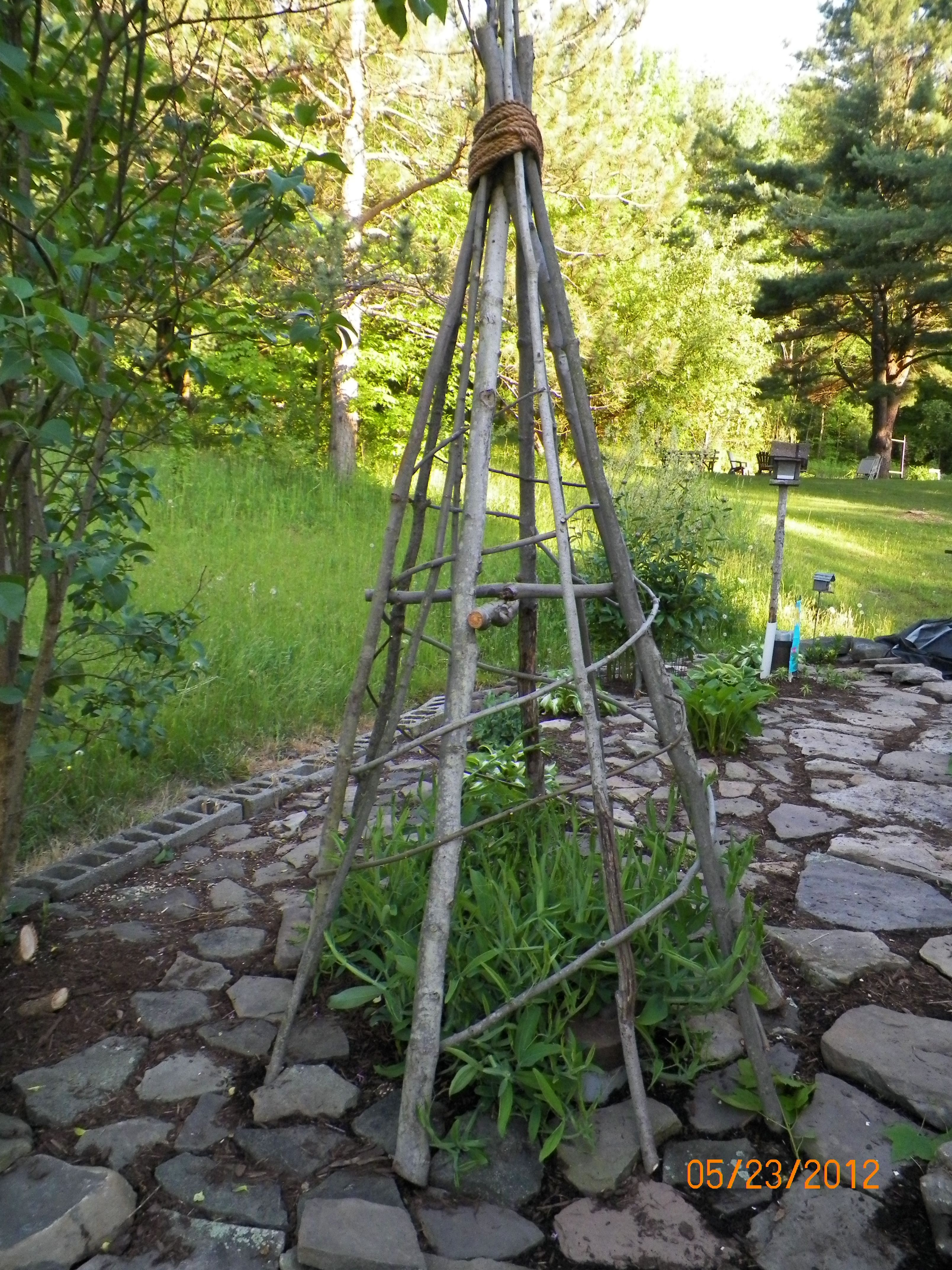 Beau My Husband And I Made This Tee Pee To Support A Sweet Pea Vine Ideas Of Garden  TriPod Trellis