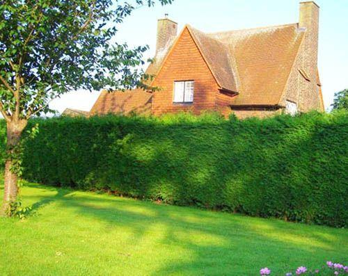 20 Green Fence Designs Pflanzen zur Verschönerung des Gartendesigns und der Gartengestaltung 20 Green Fence Designs Pflanzen zur Verschönerung des Gartendesigns...