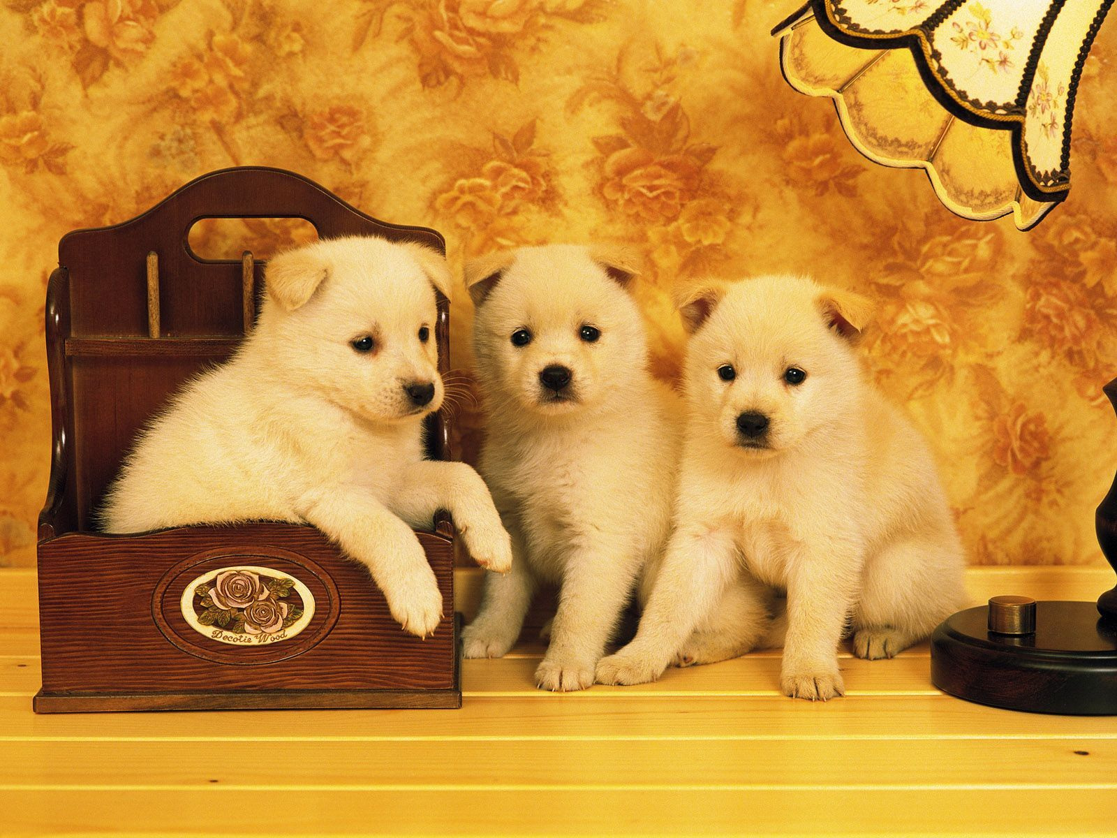 pictures of pets  cute animal pictures. Pet Animal Crafts for Kids.Images for small pet