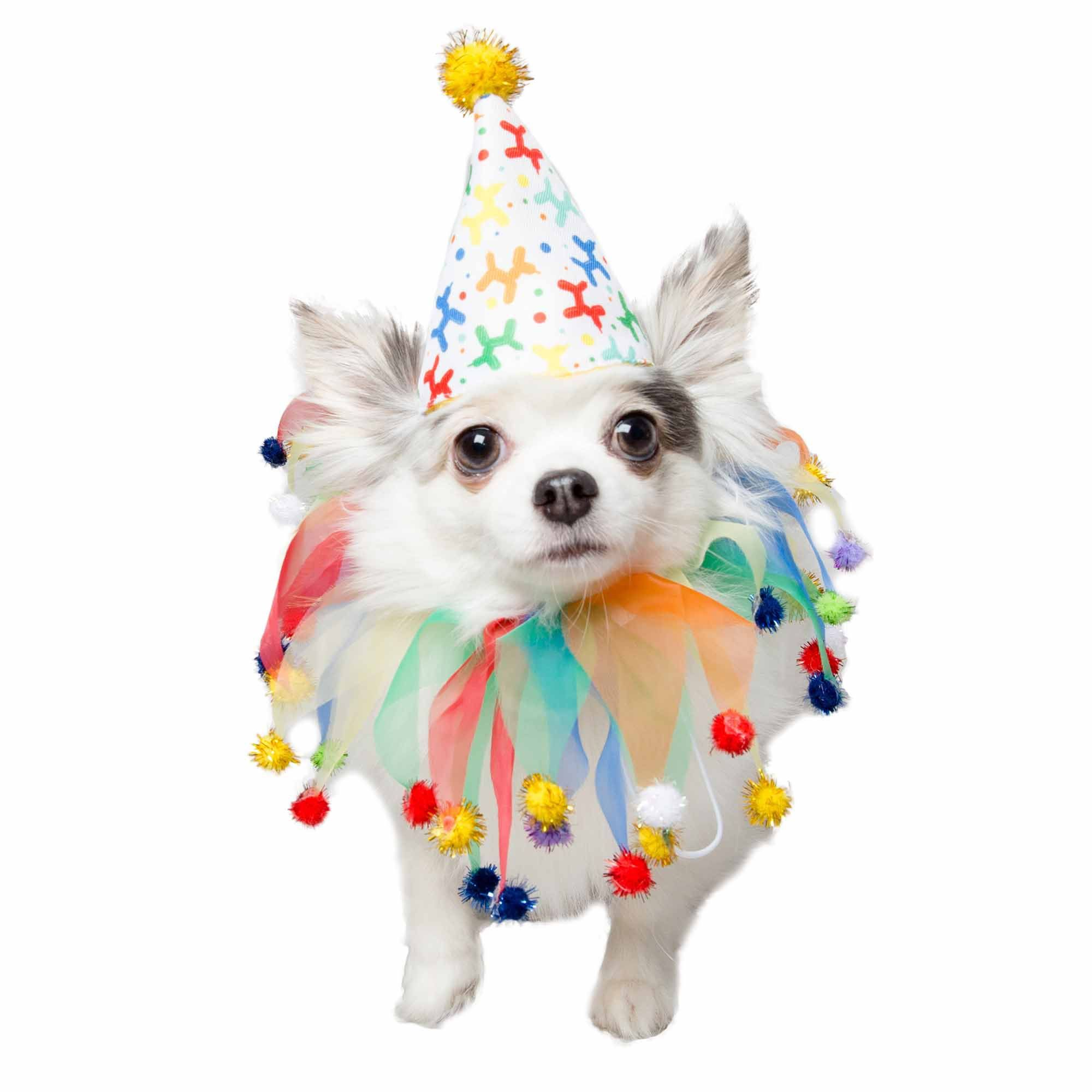Pet Krewe Birthday Hat And Celebration Collar For Dogs Large Petco Dog Hat Pet Costumes Pet Day