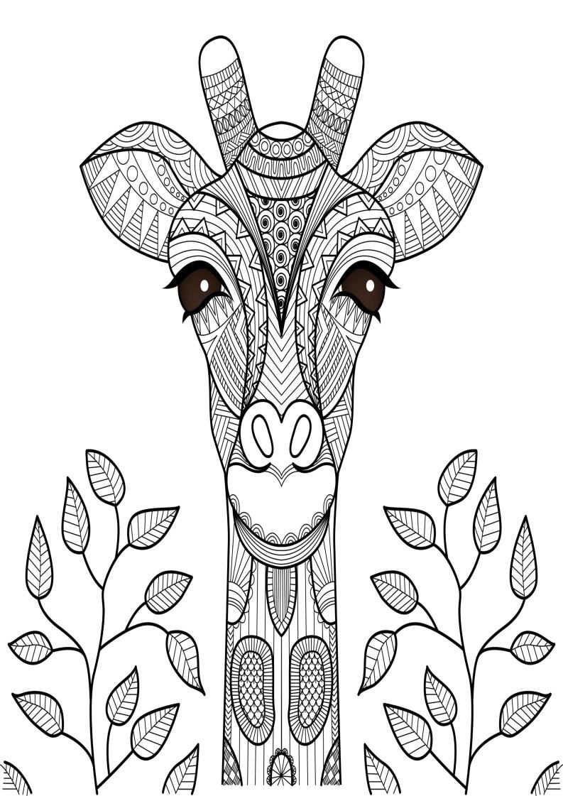 Mindfulness Coloring Giraffe Animal Doodles Giraffe Coloring Pages Animal Outline