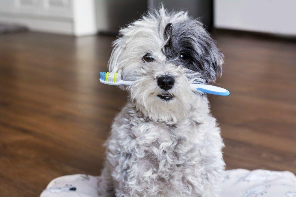 How To Brush Your Dog S Teeth Pet Dental Health