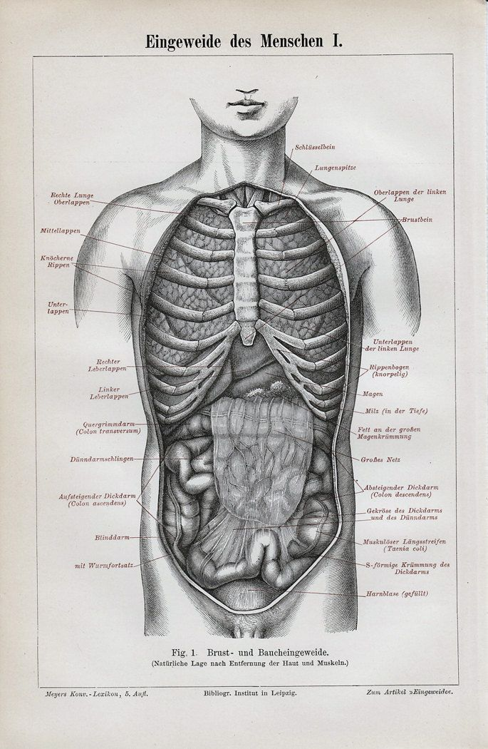 1892 Victorian ANATOMY print , viscera, entrails, bowels, guts ...