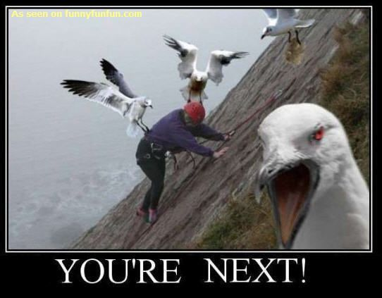 Scared Of Birds Google Search Bird Attack Funny Pictures Animal Attack