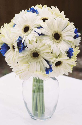 Kellysflowers Ivory Gerber Daisy With Blue Delphinium Bridal