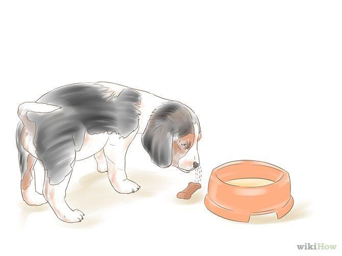 R Beagles Smart Train Beagles   DIY   ...