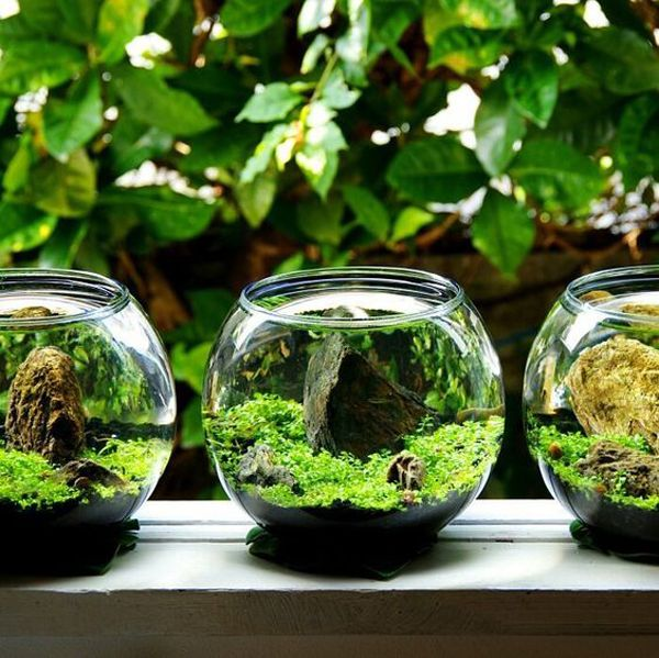 37 Indoor Water Garden Ideas That Refresh Your Interiors is part of Indoor water garden, Water gardens diy, Water garden, Water plants, Plants in jars, Food garden - Adding water features and indoor plants is a great way to freshen up the room  There are several types of plants that you can grow that are included in tropical