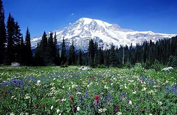 Get to Know Evergreen Colorado | Evergreen colorado, Colorado vacation  spots, Explore colorado