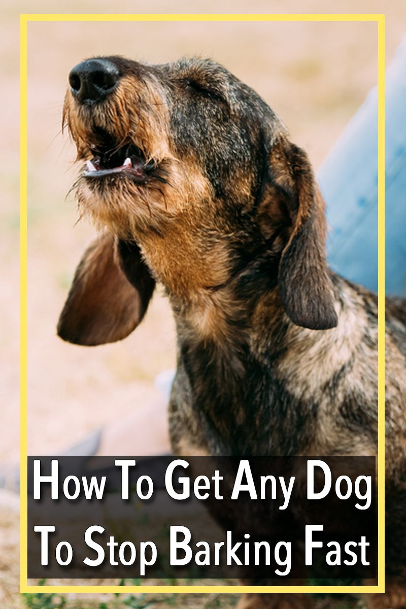 Does your dog have some bad behaviors they need help