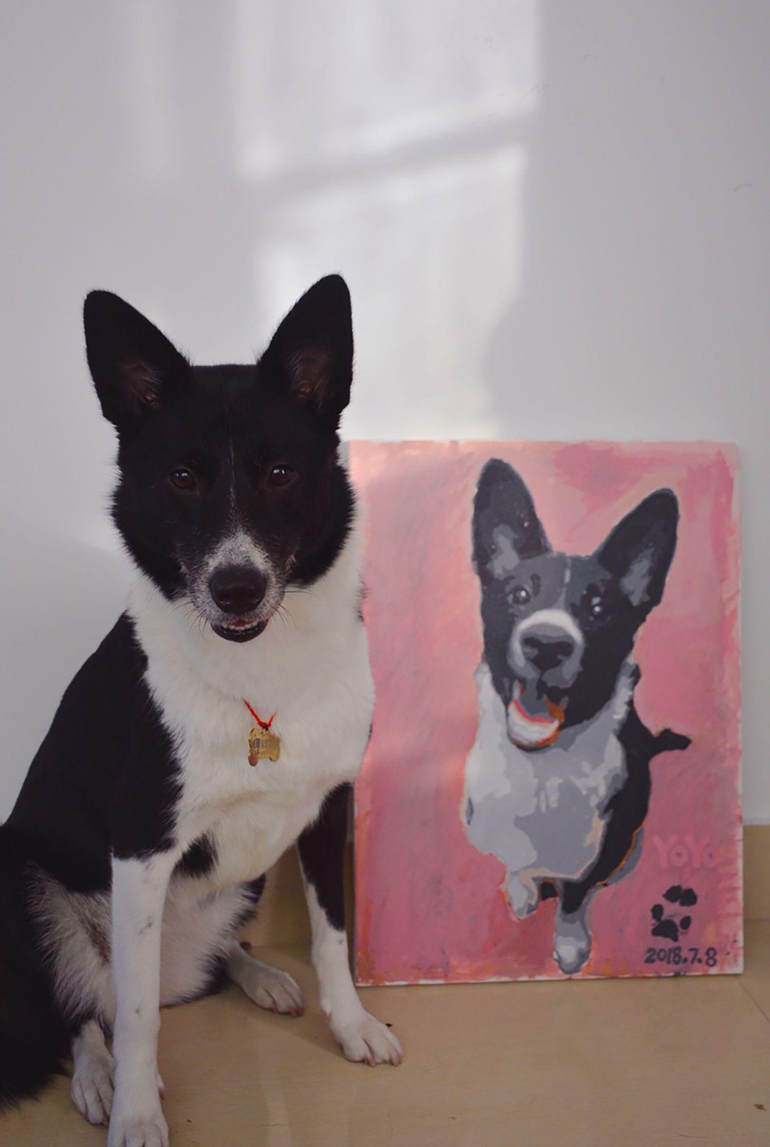 Custom Paint By Number Kit Paint Your Pets Portrait By Yourself Paint Your Pet Pet Portraits Personalized Pet