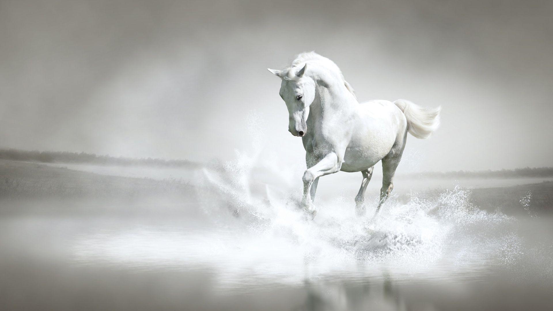 White Horse [1920 x 1080] Need iPhone 6S Plus Wallpaper