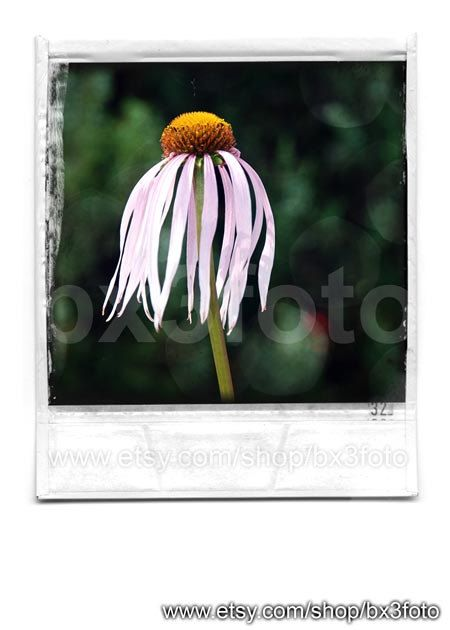 Daisy flower Polaroid 02  Spring flower photography by bx3foto Spring is almost here, get in the mood. Decorate your home with art photography. #spring #flower #gallerywall #springdecor #daisy #gerberaphoto #artphoto #love #etsy #bx3foto