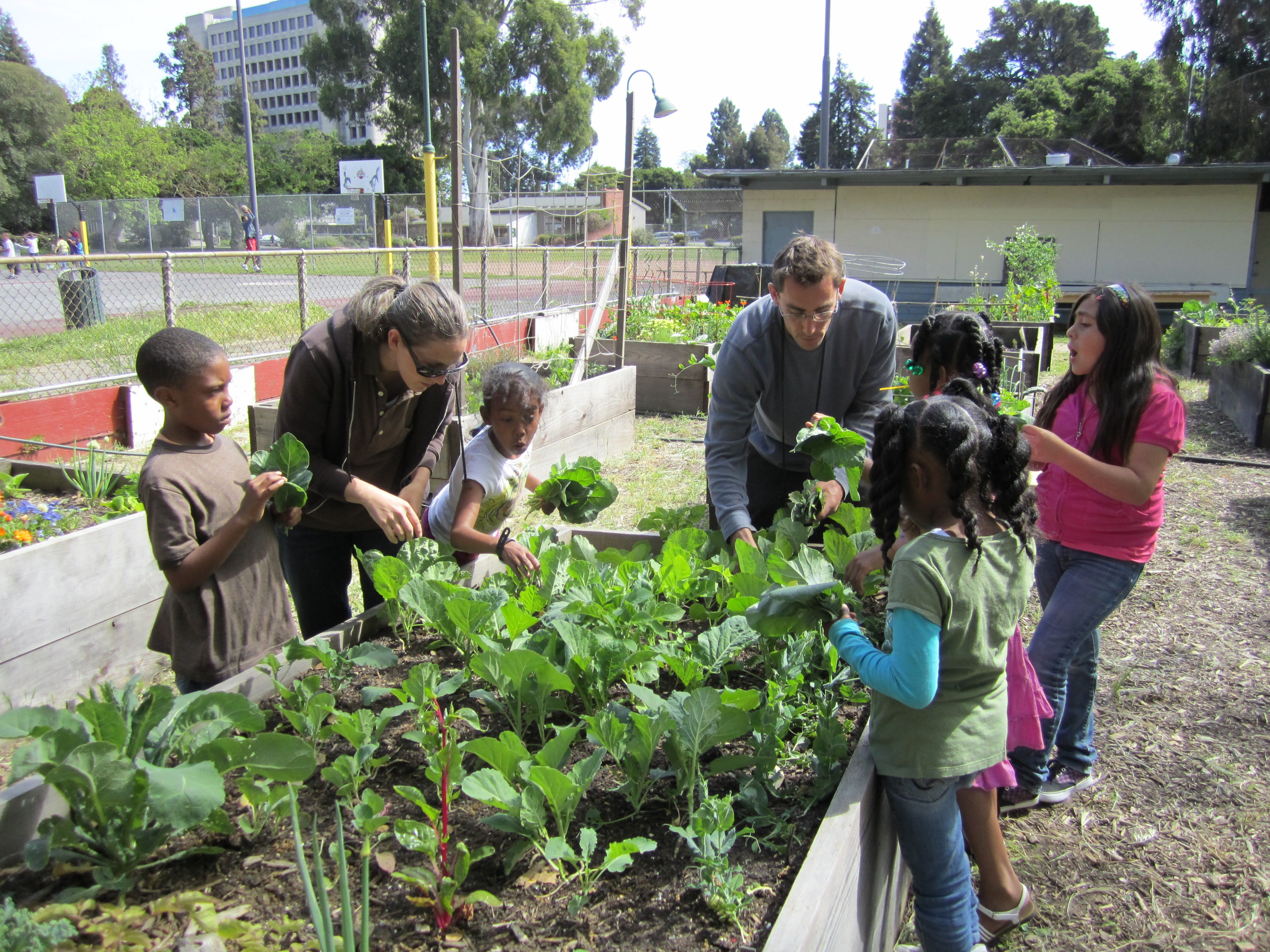 community garden ideas community gardening city of oakland ...