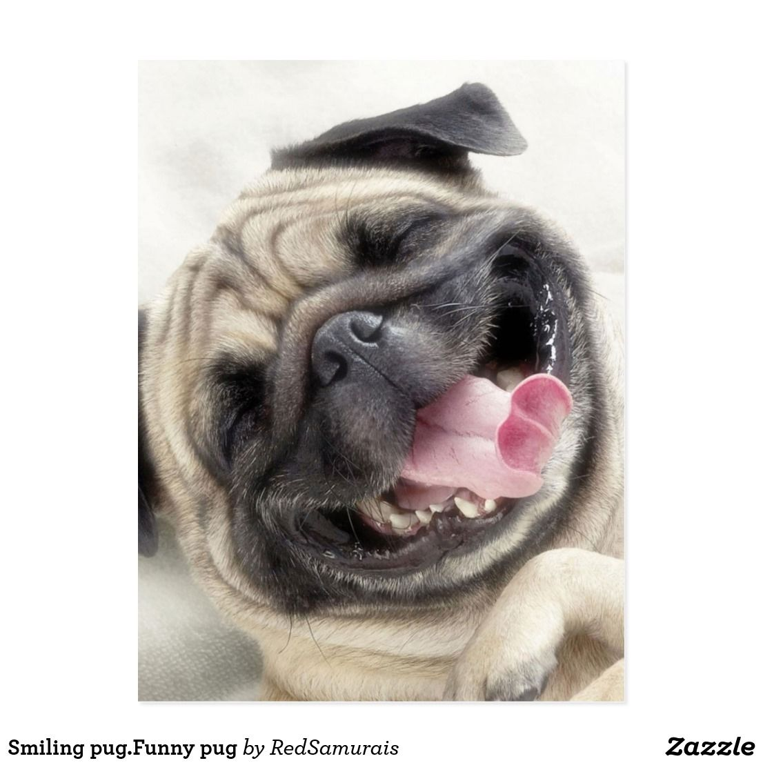 Smiling Pug Funny Pug Postcard Zazzle Com Pugs Funny Cute Pugs Puggle Puppies