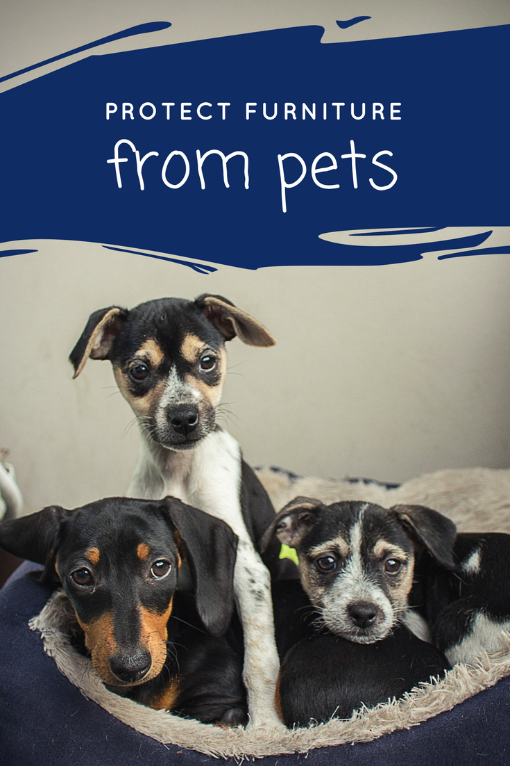 5 Helpful Ways To Protect Furniture From Pets Pet Friendly Hotels Dog Friends Pet Travel