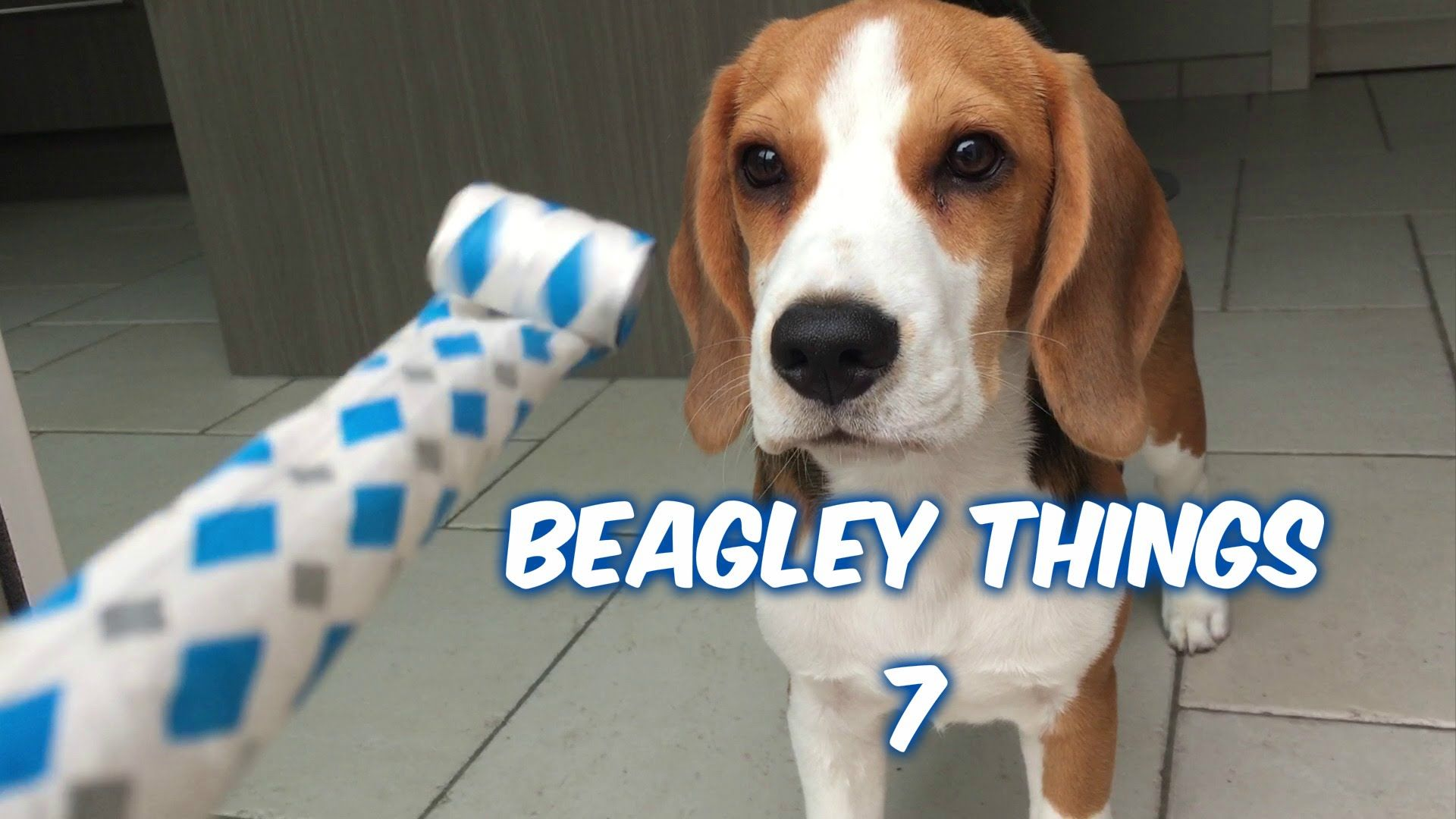 Funny Beagley Things Why You Should Get A Beagle Dog Episode