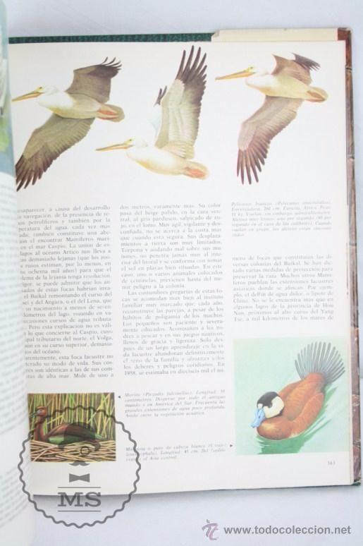 Libros de segunda mano: Libro Naturalia. Enciclopedia Ecológica de Ciencias Naturales. Vol I. Fauna Pantanos - Codex, 1965 - Foto 4 - 50515252