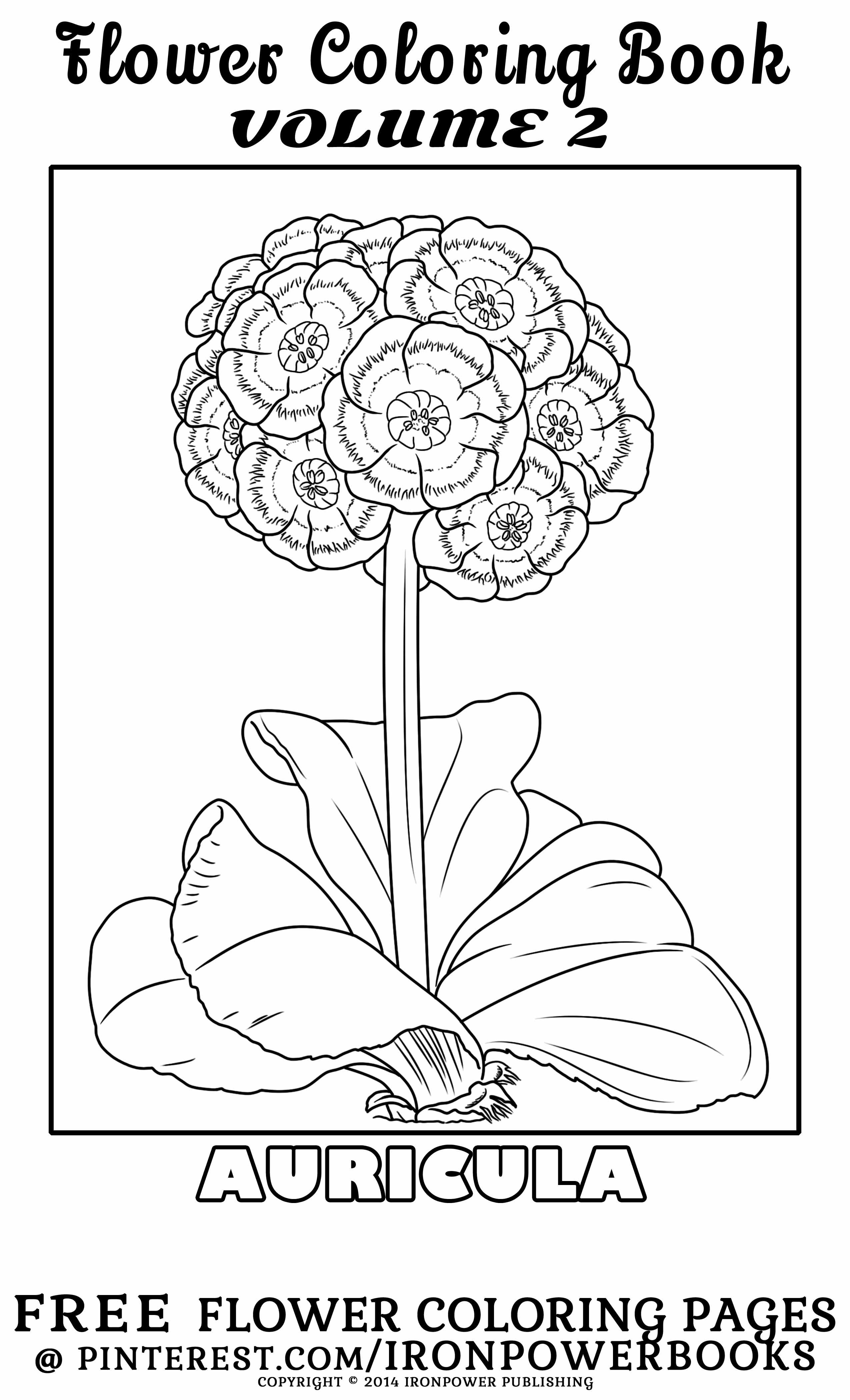 FREE Intricate Auricula Flower Coloring Page @ironpowerbooks | For ...