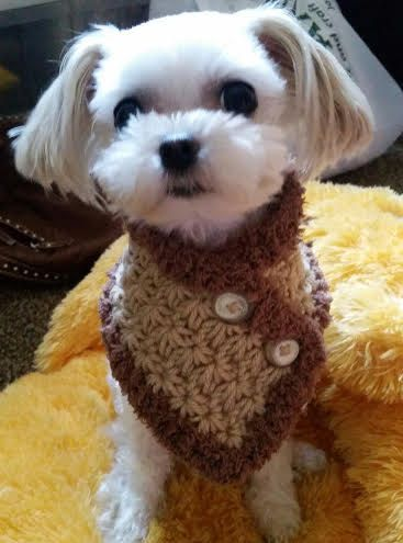 Crocheted Small Dog Neck Warmer Dog Neck Warmer Small Dog Scarf