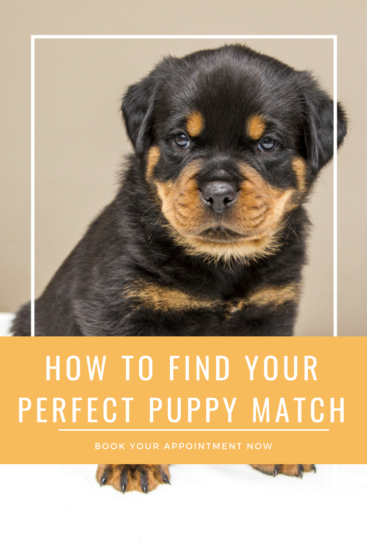 How To Find Your Perfect Puppy Match Make Your Appointment Now Puppies New Puppy Dog Care