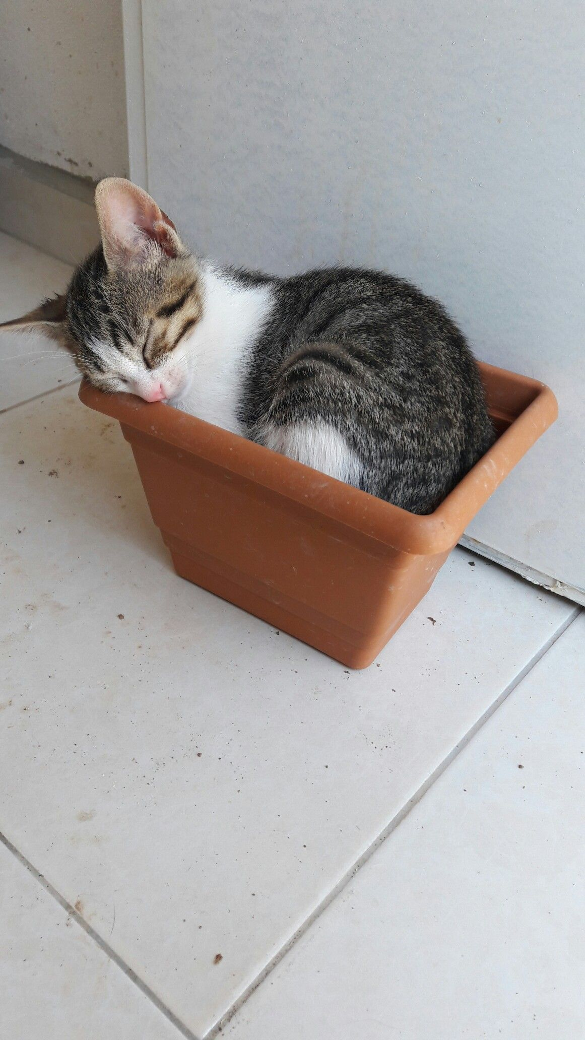 Pin By Homeagain Petrescuer On Cats Cute Cats Kittens Cat Box