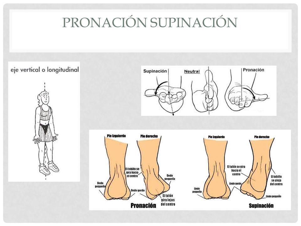 Resultado de imagen de pronacion supinacion | Localización de ...