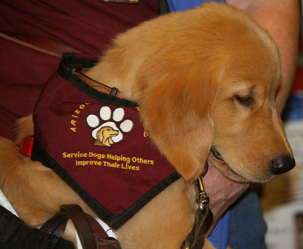 Most Everyone Has Heard Of Guide Dogs For The Blind And There Are