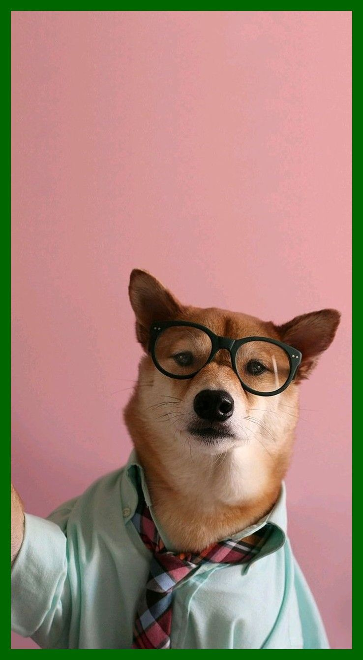 Mascotas Esteticas 45deb05127063b With Images Dog Wallpaper