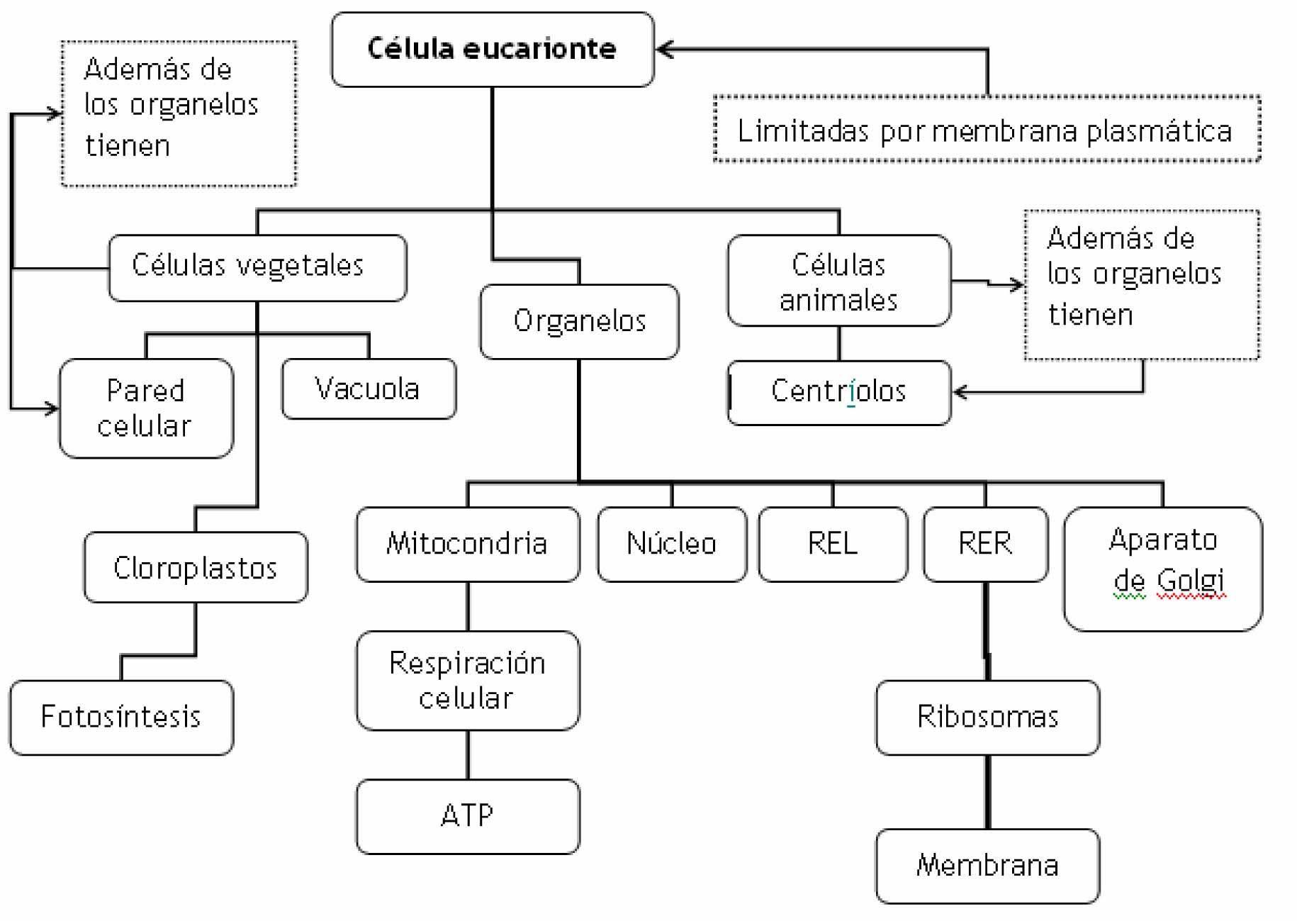 celula animal vegetal procariota y eucariota  Buscar con Google