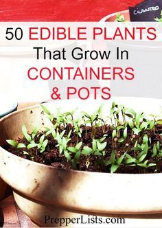 50 Edible Plants You Can Grow In Containers And Pots 400 x 300
