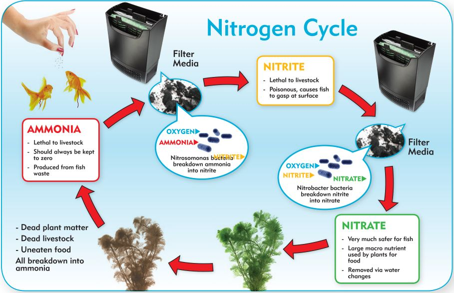 You must learn the nitrogen cycle if you want to keep for Cycling a fish tank