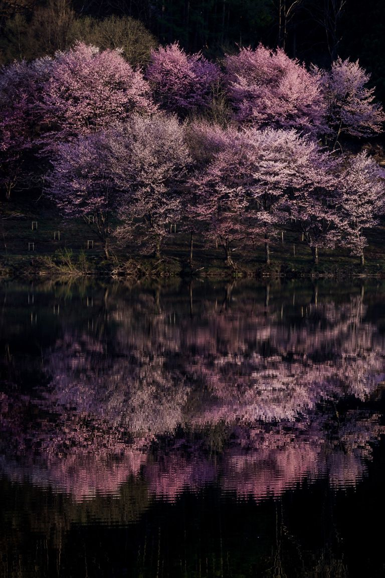 "heaven-ly-mind: "" Cherry Reflection """