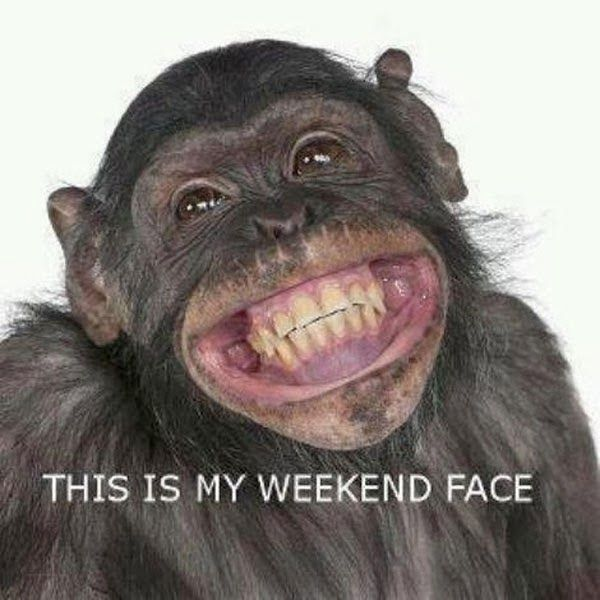 Funny Animal Pictures Of Cheeky Monkey Smiling Animals Monkeys