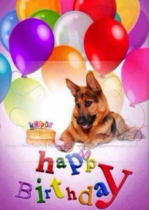 The German Shepherd Birthday Cards Images Happy