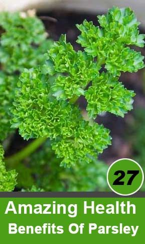 Health Benefits Of Parsley: parsley helps remove or dissolve the cholesterol accumulated in the veins.