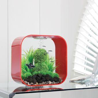 Biorb Life Aquarium Very Sexy Fish Tank Also Cat Proof Fishies