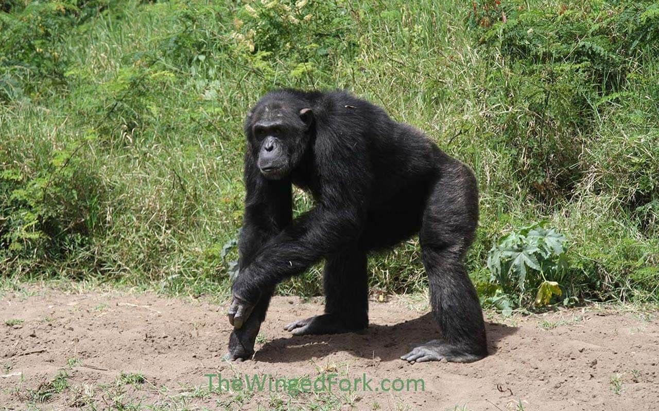 My top ten favorite parks in Kenya Chester zoo, Kenya