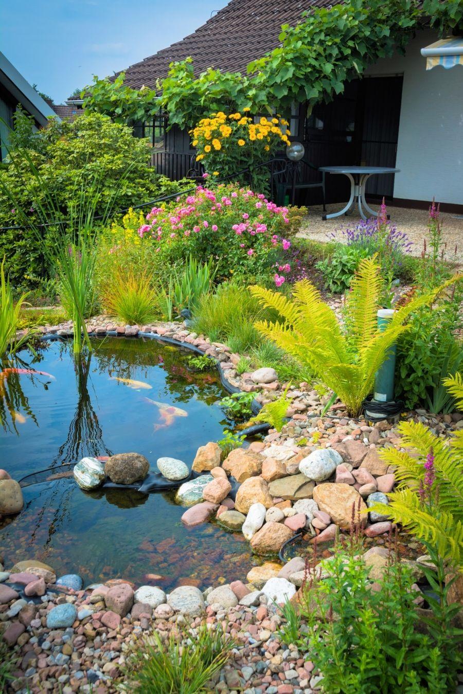 Gartenteich reinigen   bitte Teichlebewesen berücksichtigen   Gartenteich