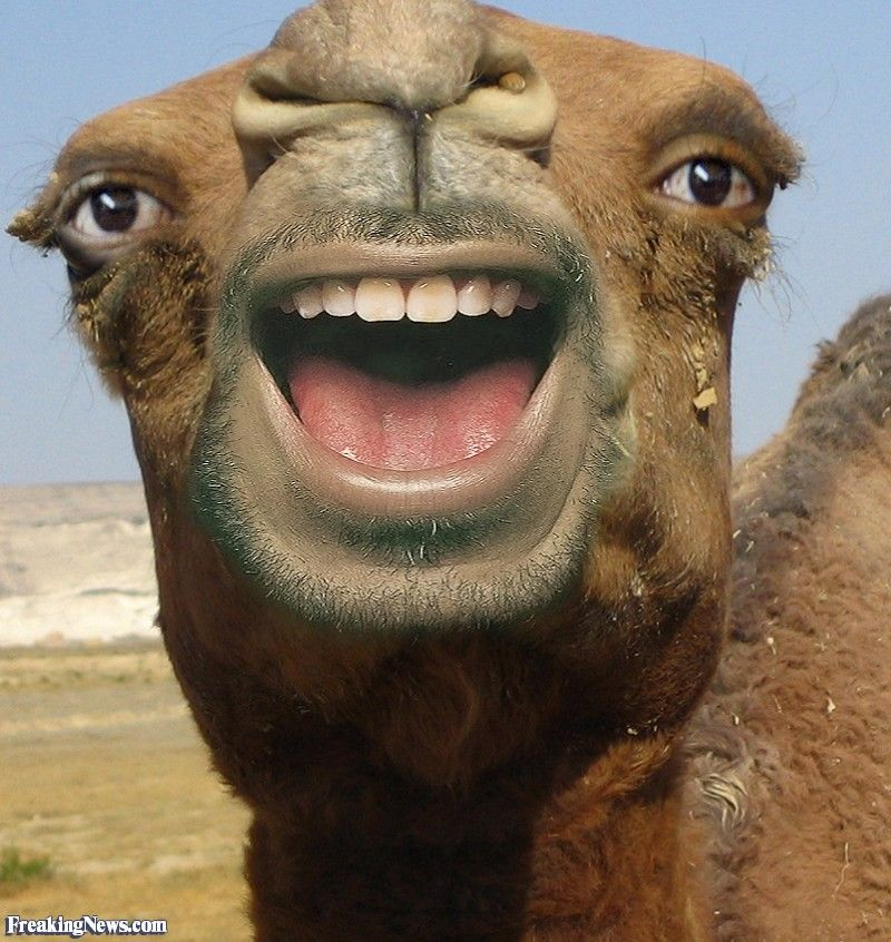 Human Faced Animals Pictures Freaking News Animal Pictures Animals Human Teeth