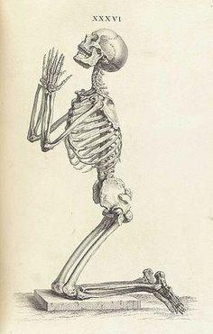 A Whole Year Based On Knee On The Floor Thanksgod Skeleton Art Drawings Art