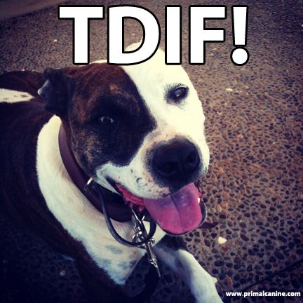 Tdif Dog Training Dogs Dog Psychology