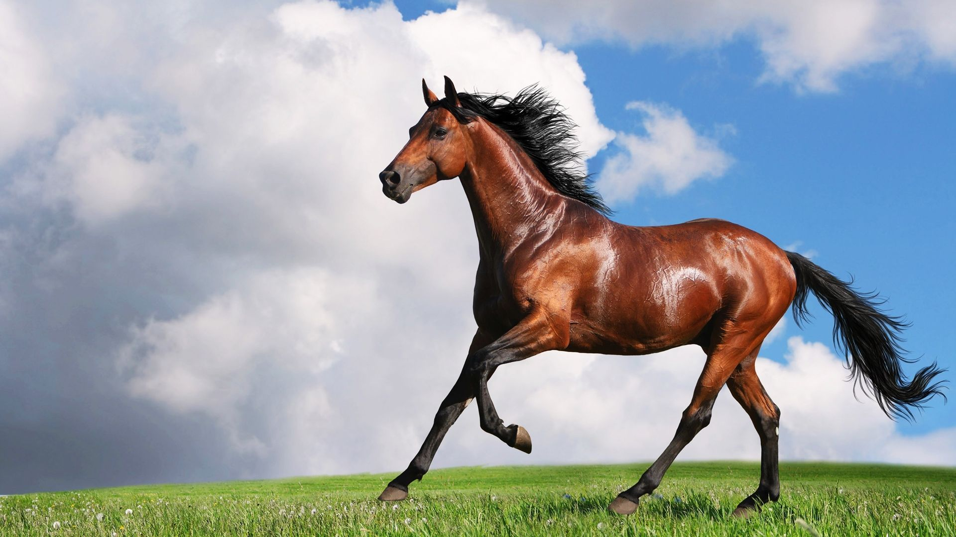 Download Running Beautiful Horse Hd Wallpaper 1080p Jh Horses